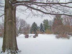 trees-18677_960_720