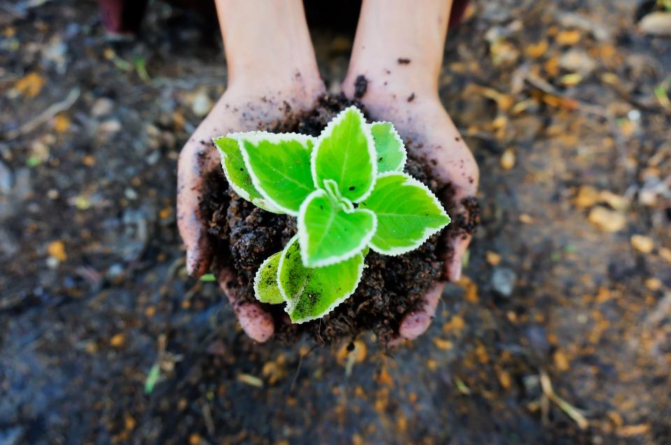 seedling-1558599_960_720